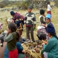 Kusi Sonqo is based in Central Peru. They seek volunteers with experience in medicine, education and construction. Low cost volunteering. Min 1 month commitment