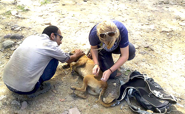 Animal Rescue Volunteer India