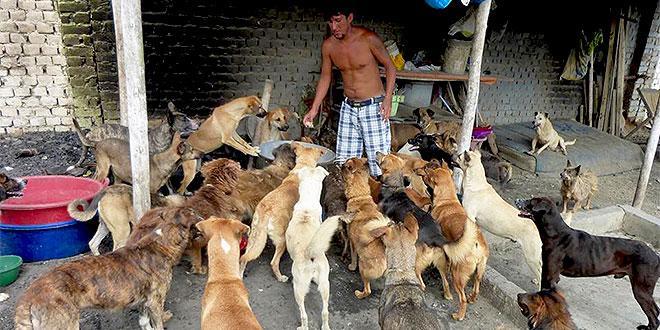 Dog Shelter Carer