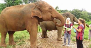 Volunteer Teaching Exploring Thailand